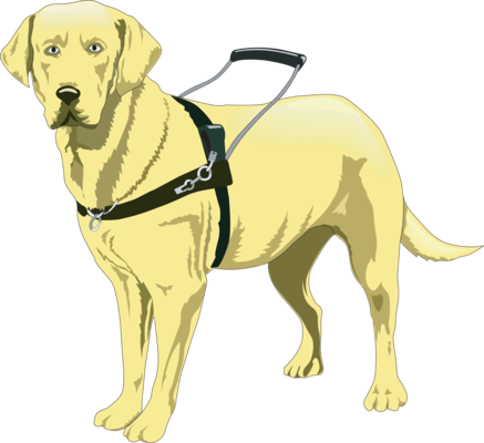 Do You Know The Proper Etiquette Around Service Dogs?