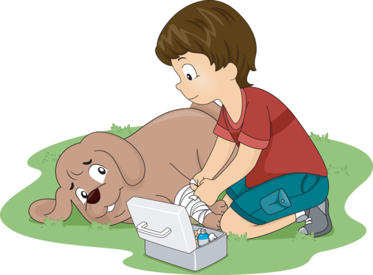 What To Have In Your Pets First Aid Kit